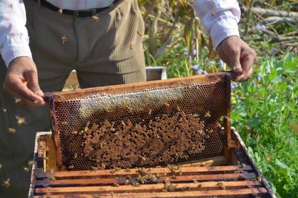 Récolte de miel.