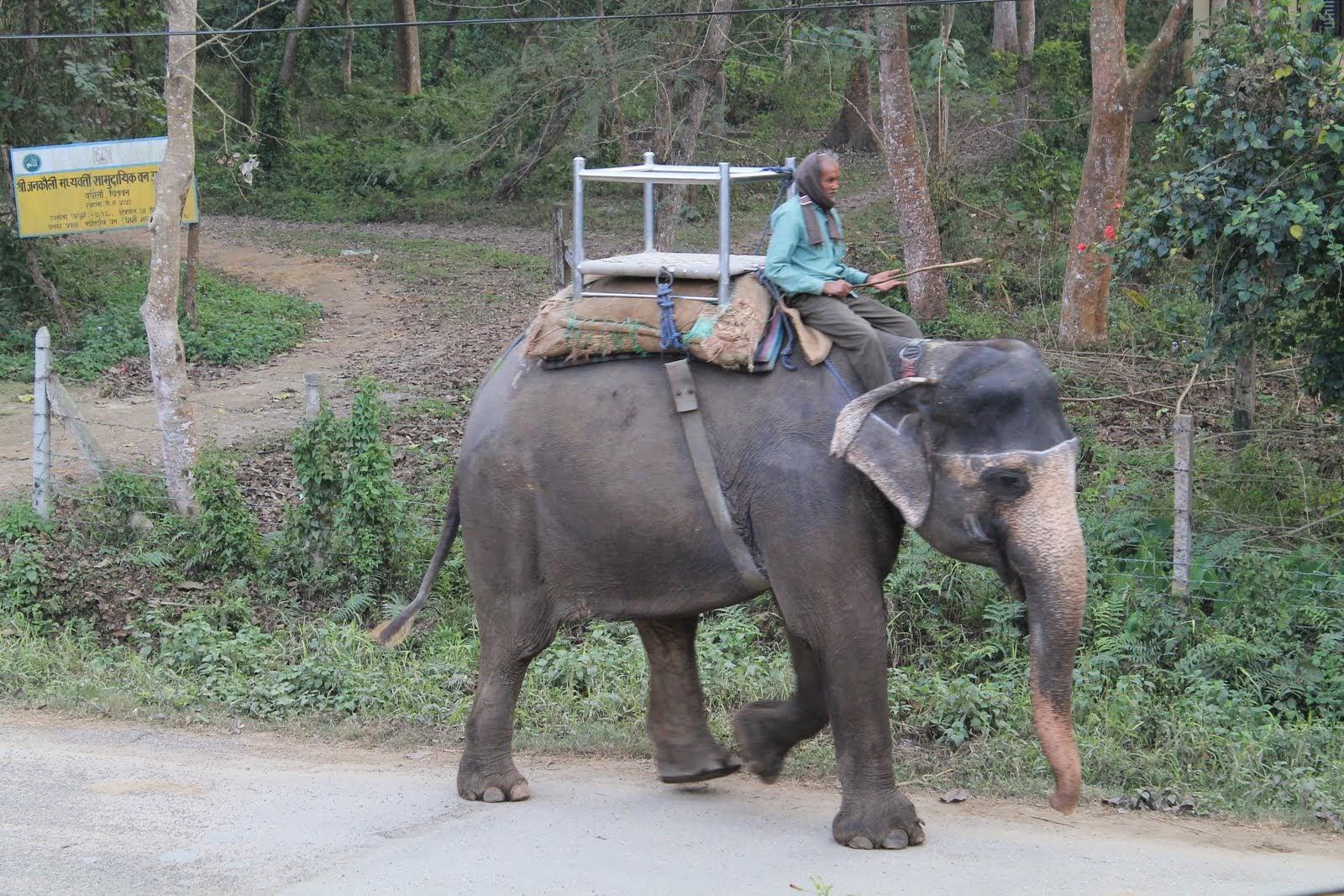 Sahaura - Eléphant dans la rue.